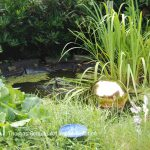 golden-pond-ball-150x150.jpg