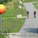 planet-sphere-150x150.jpg